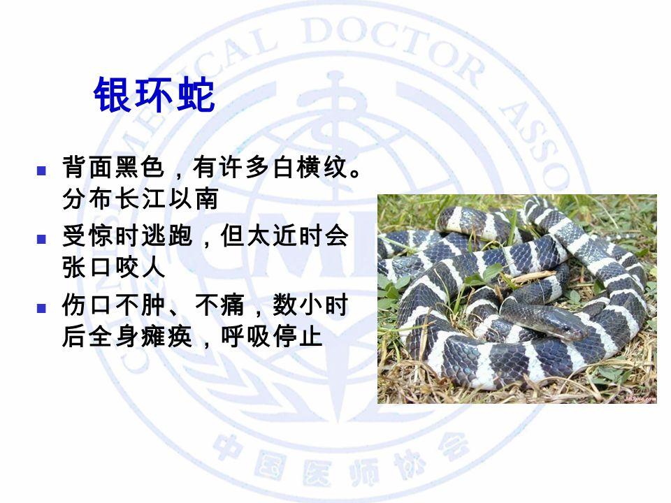 银环蛇 背面黑色,有许多白横纹。 分布长江以南 受惊时逃跑,但太近时会 张口咬人 伤口不肿、不痛,数小时 后全身瘫痪,呼吸停止