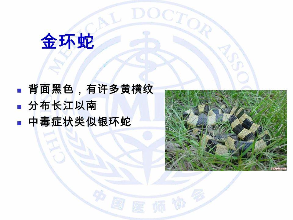 金环蛇 背面黑色,有许多黄横纹 分布长江以南 中毒症状类似银环蛇