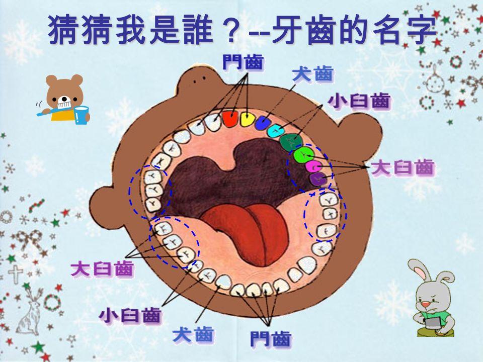 乳牙有幾顆 恆牙有幾顆 20 顆 32 顆