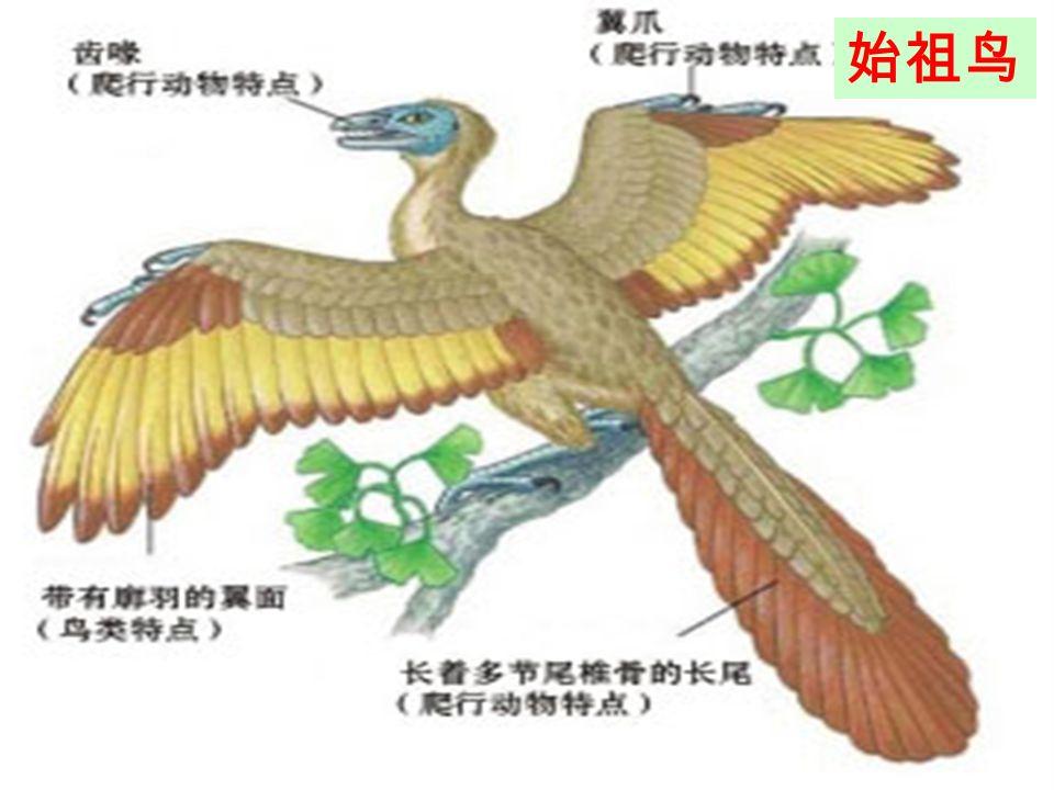 体表覆盖角质的鳞片或甲,用肺呼吸;在陆地上产卵,卵表面有坚韧的卵壳 爬行动物