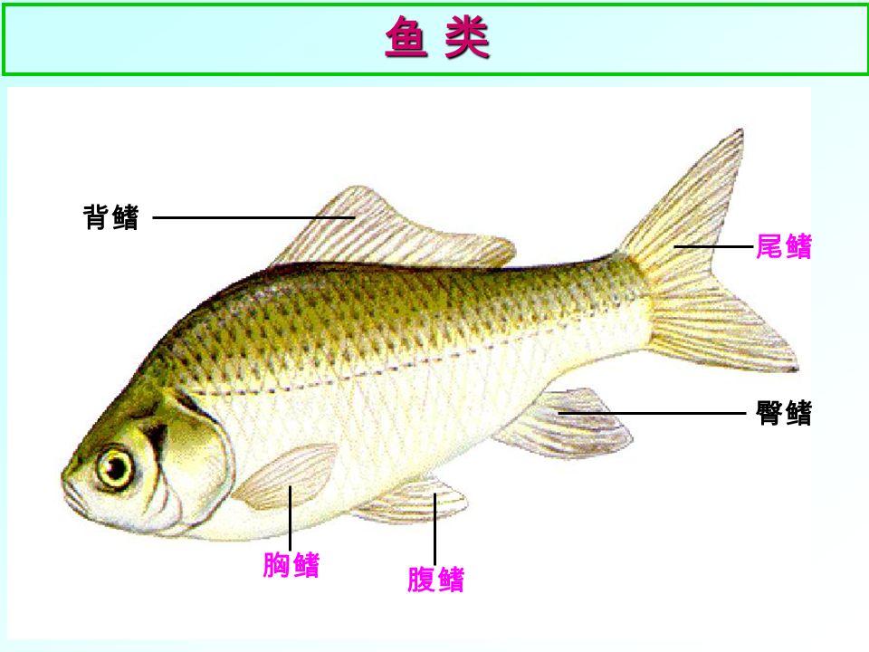 鱼 两栖动物 爬行动物 鸟 哺乳动物 脊椎动物