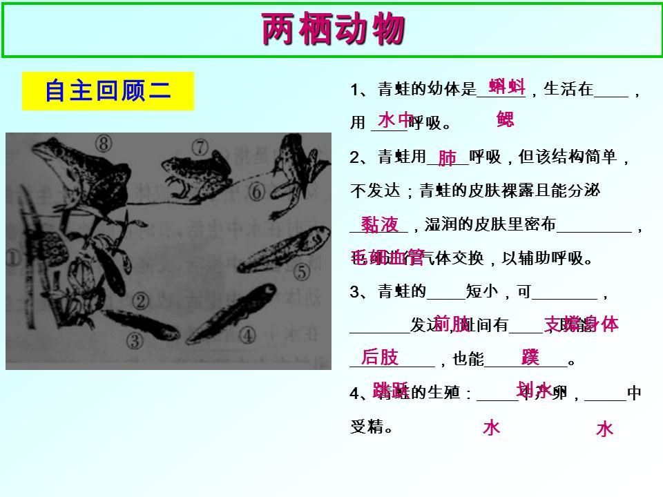 5 、下列不是鱼的是( ) A 、带鱼 B 、娃娃鱼 C 、青鱼 D 、鲨鱼 鱼 类鱼 类鱼 类鱼 类 小试牛刀 1 、鱼的骨骼在身体内部,身体内有由脊椎骨组成 的 ,称为 动物。 2 、鱼的体型大多呈 型,有利于减少在水中 运动的 。鱼的体表被覆光滑的 ,能分泌 黏液,起到 的作用。 3 、鱼在水中通过 的摆动以 及 的协调作用游泳。【⑥】和【⑦】的作用 是 。 4 、用吸管吸取一些墨汁,慢慢滴在鱼口的前方, 会看到墨汁从鱼的 流出;轻轻掀起鳃盖,发现鱼鳃的颜色是 色, 原因是鳃丝上布满了 。 脊柱脊椎 流线 阻力 鳞片 保护 躯干部和尾部 鳍 维持鱼体平衡 鳃盖后缘 鲜红 毛细血管 B