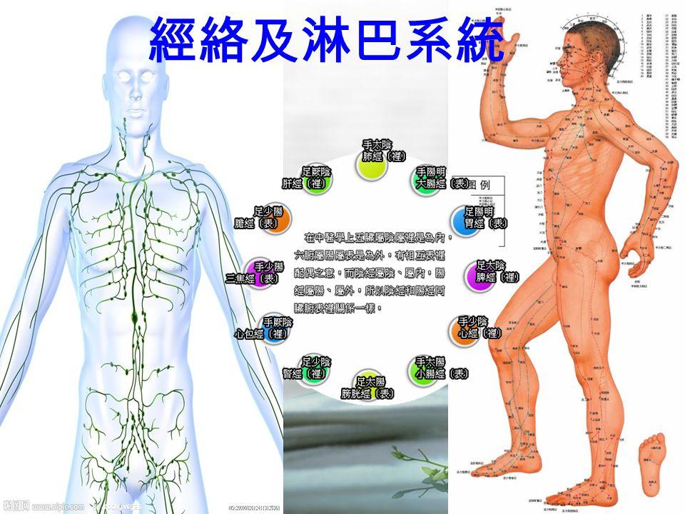 經絡及淋巴系統