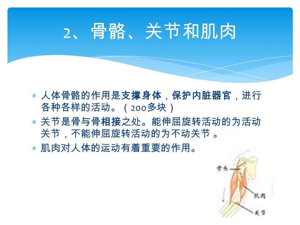  人体骨骼的作用是支撑身体,保护内脏器官,进行 各种各样的活动。( 200 多块)  关节是骨与骨相接之处。能伸屈旋转活动的为活动 关节,不能伸屈旋转活动的为不动关节 。  肌肉对人体的运动有着重要的作用。 2 、骨骼、关节和肌肉