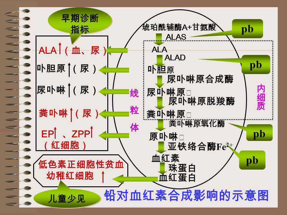 (一)卟啉代谢障碍 (二)对红细胞的直接作用 (三)对血管的直接作用 (四)对 N 系统的影响
