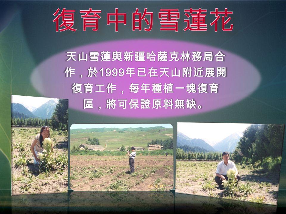 天山雪蓮與新疆哈薩克林務局合 作,於 1999 年已在天山附近展開 復育工作,每年種植一塊復育 區,將可保證原料無缺。