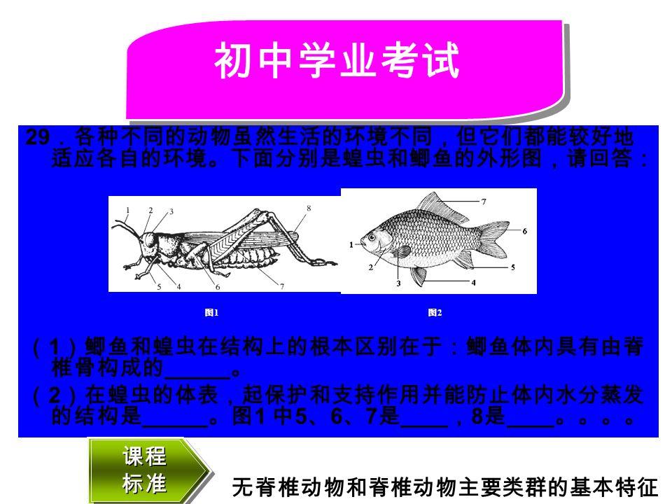 29 .各种不同的动物虽然生活的环境不同,但它们都能较好地 适应各自的环境。下面分别是蝗虫和鲫鱼的外形图,请回答: ( 1 )鲫鱼和蝗虫在结构上的根本区别在于:鲫鱼体内具有由脊 椎骨构成的 。 ( 2 )在蝗虫的体表,起保护和支持作用并能防止体内水分蒸发 的结构是 。图 1 中 5 、 6 、 7 是 , 8 是 。。。。 初中学业考试 图1图1 图2图2 课程 标准 课程 标准 无脊椎动物和脊椎动物主要类群的基本特征