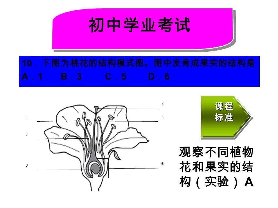 10 .下图为桃花的结构模式图。图中发育成果实的结构是 A . 1 B . 3 C . 5 D . 6 初中学业考试 4 5 3 6 1 2 课程 标准 课程 标准 观察不同植物 花和果实的结 构(实验) A