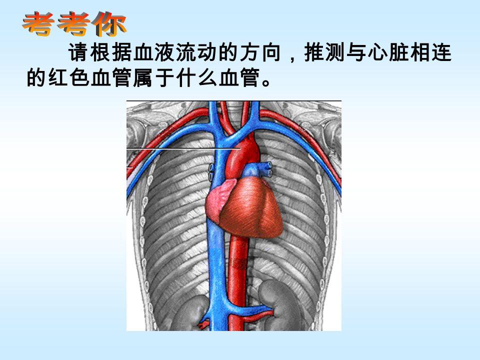 请根据血液流动的方向,推测与心脏相连 的红色血管属于什么血管。