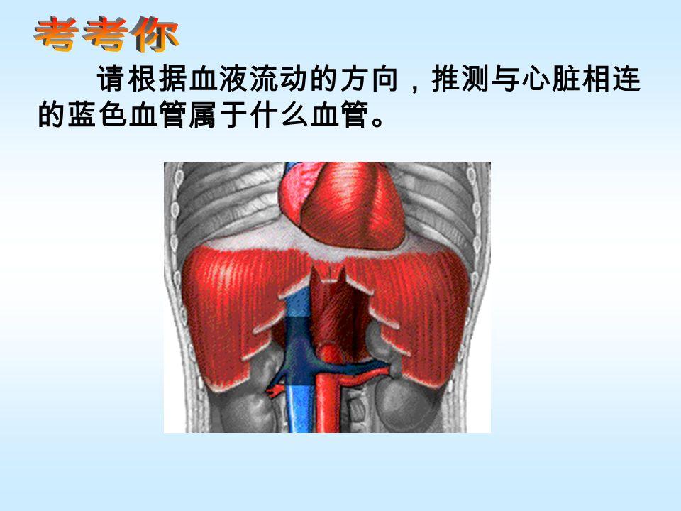 请根据血液流动的方向,推测与心脏相连 的蓝色血管属于什么血管。