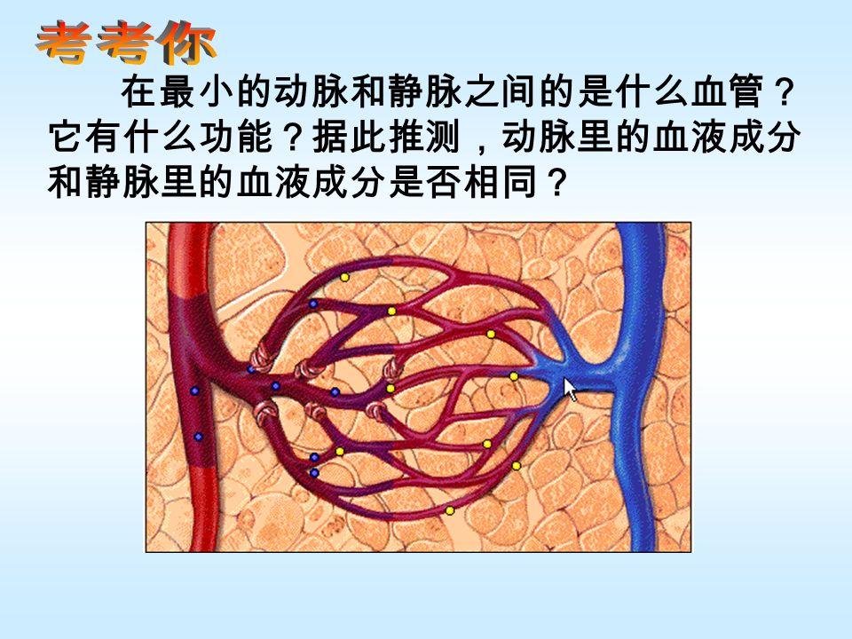 在最小的动脉和静脉之间的是什么血管? 它有什么功能?据此推测,动脉里的血液成分 和静脉里的血液成分是否相同?