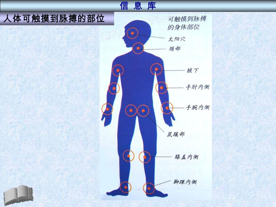 人体可触摸到脉搏的部位 信 息 库