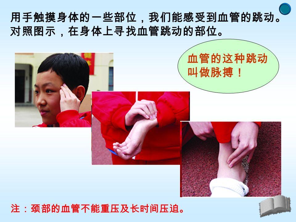 用手触摸身体的一些部位,我们能感受到血管的跳动。 对照图示,在身体上寻找血管跳动的部位。 注:颈部的血管不能重压及长时间压迫。 血管的这种跳动 叫做脉搏!