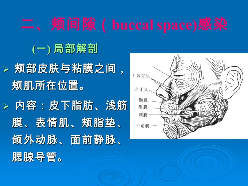 二、颊间隙( buccal space) 感染 ( 一 ) 局部解剖  颊部皮肤与粘膜之间, 颊肌所在位置。  内容:皮下脂肪、浅筋 膜、表情肌、颊脂垫、 颌外动脉、面前静脉、 腮腺导管。