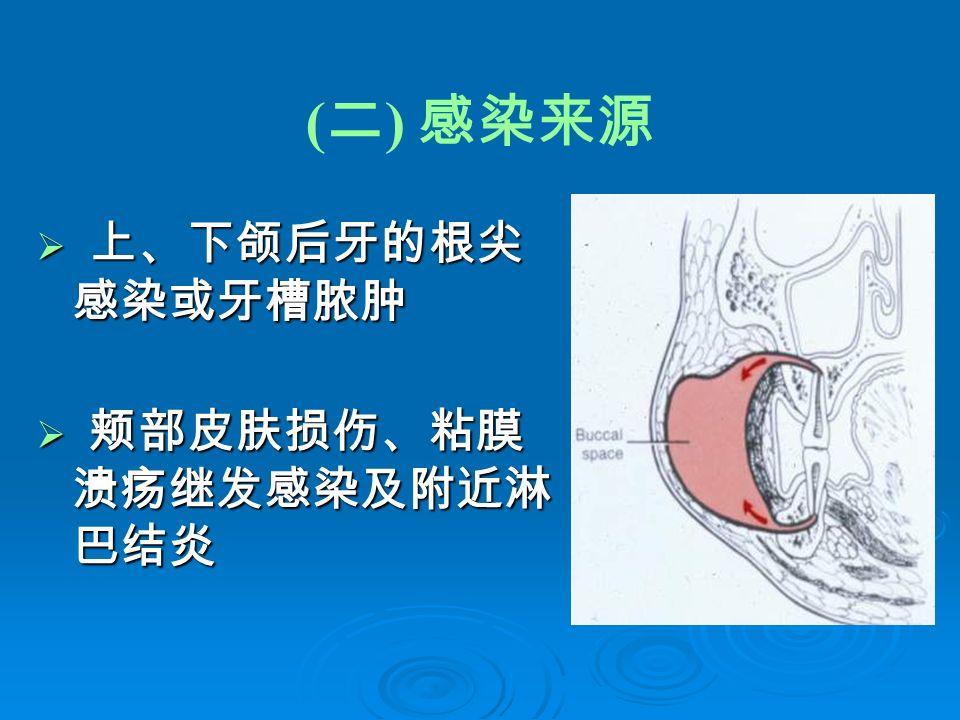 ( 二 ) 感染来源  上、下颌后牙的根尖 感染或牙槽脓肿  颊部皮肤损伤、粘膜 溃疡继发感染及附近淋 巴结炎