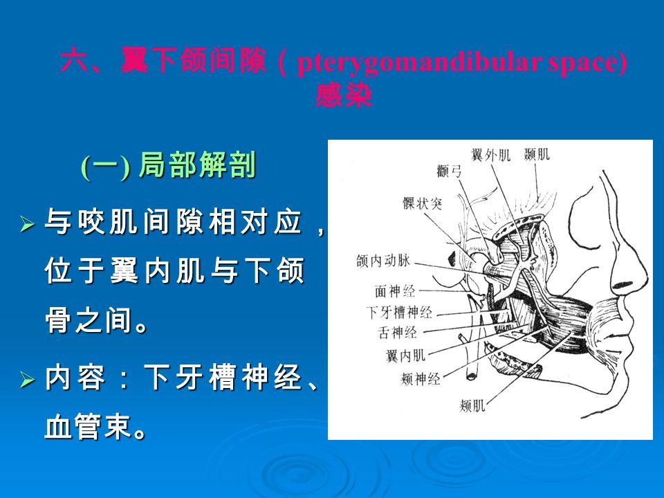 六、翼下颌间隙( pterygomandibular space) 感染 ( 一 ) 局部解剖 ( 一 ) 局部解剖  与咬肌间隙相对应, 位于翼内肌与下颌 骨之间。  内容:下牙槽神经、 血管束。