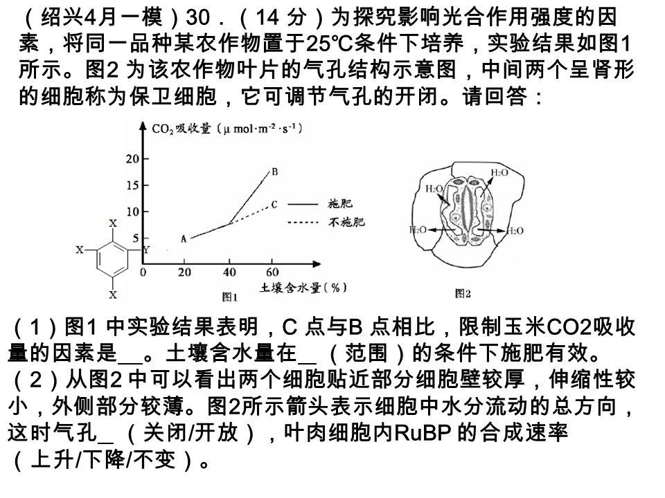 (绍兴 4 月一模) 30 .( 14 分)为探究影响光合作用强度的因 素,将同一品种某农作物置于 25 ℃条件下培养,实验结果如图 1 所示。图 2 为该农作物叶片的气孔结构示意图,中间两个呈肾形 的细胞称为保卫细胞,它可调节气孔的开闭。请回答: ( 1 )图 1 中实验结果表明, C 点与 B 点相比,限制玉米 CO2 吸收 量的因素是 。土壤含水量在 (范围)的条件下施肥有效。 ( 2 )从图 2 中可以看出两个细胞贴近部分细胞壁较厚,伸缩性较 小,外侧部分较薄。图 2 所示箭头表示细胞中水分流动的总方向, 这时气孔 (关闭 / 开放),叶肉细胞内 RuBP 的合成速率 (上升 / 下降 / 不变)。