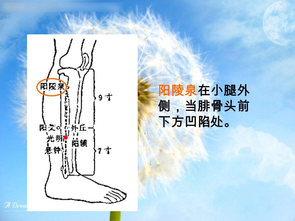 阳陵泉在小腿外 侧,当腓骨头前 下方凹陷处。