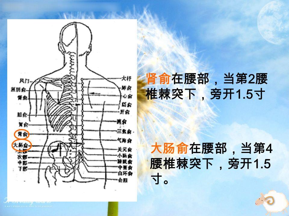 肾俞在腰部,当第 2 腰 椎棘突下,旁开 1.5 寸 大肠俞在腰部,当第 4 腰椎棘突下,旁开 1.5 寸。