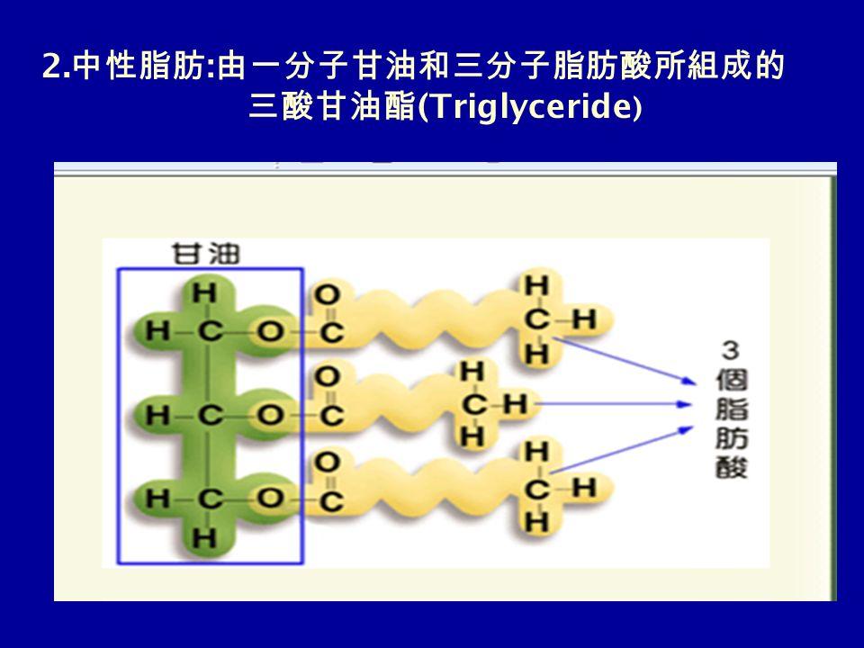 2. 中性脂肪 : 由一分子甘油和三分子脂肪酸所組成的 三酸甘油酯 (Triglyceride )