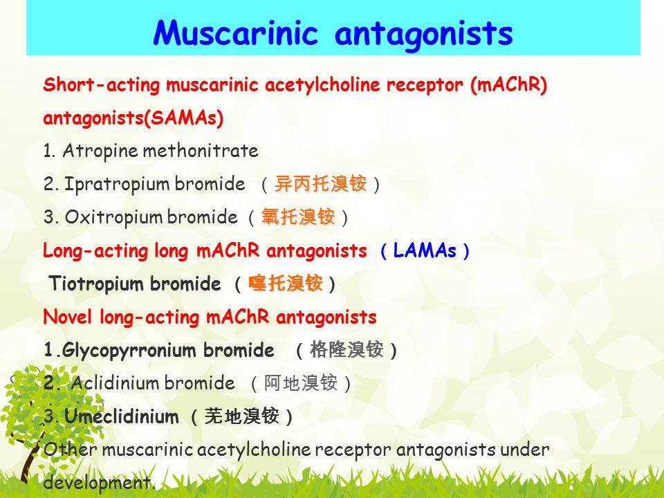 Muscarinic antagonists Short-acting muscarinic acetylcholine receptor (mAChR) antagonists(SAMAs) 1.