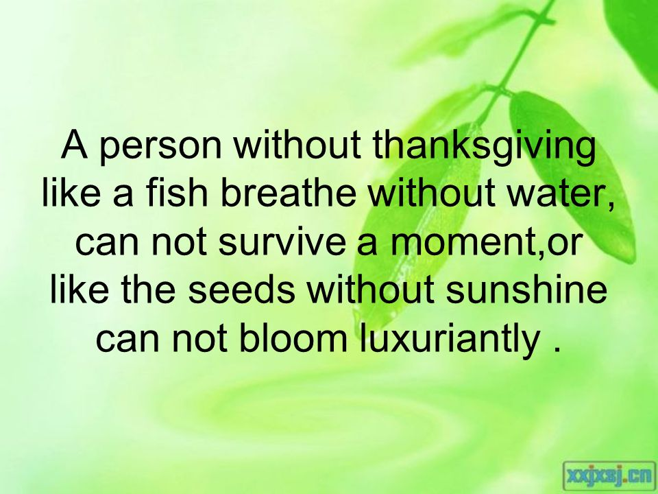 A person without thanksgiving like a fish breathe without water, can not survive a moment,or like the seeds without sunshine can not bloom luxuriantly.