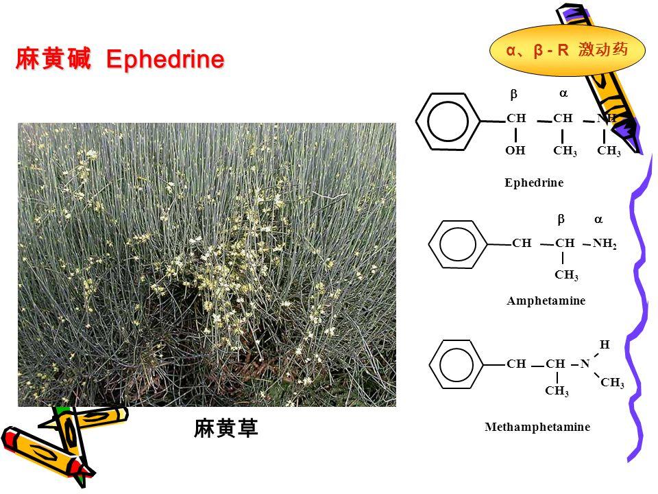 麻黄碱 Ephedrine 麻黄草   CH NH OHCH 3 Ephedrine  CH NH 2 CH 3 Amphetamine CH N CH 3 H Methamphetamine α 、 β - R 激动药
