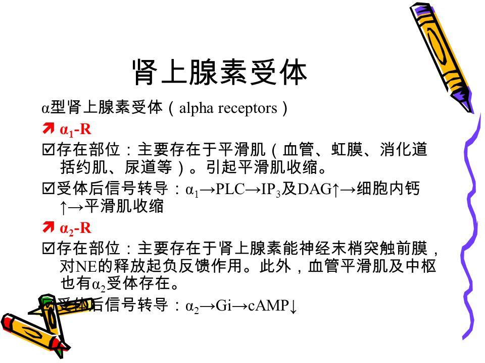 肾上腺素受体 α 型肾上腺素受体( alpha receptors )  α 1 -R  存在部位:主要存在于平滑肌(血管、虹膜、消化道 括约肌、尿道等)。引起平滑肌收缩。  受体后信号转导: α 1 →PLC→IP 3 及 DAG↑→ 细胞内钙 ↑→ 平滑肌收缩  α 2 -R  存在部位:主要存在于肾上腺素能神经末梢突触前膜, 对 NE 的释放起负反馈作用。此外,血管平滑肌及中枢 也有 α 2 受体存在。  受体后信号转导: α 2 →Gi→cAMP↓