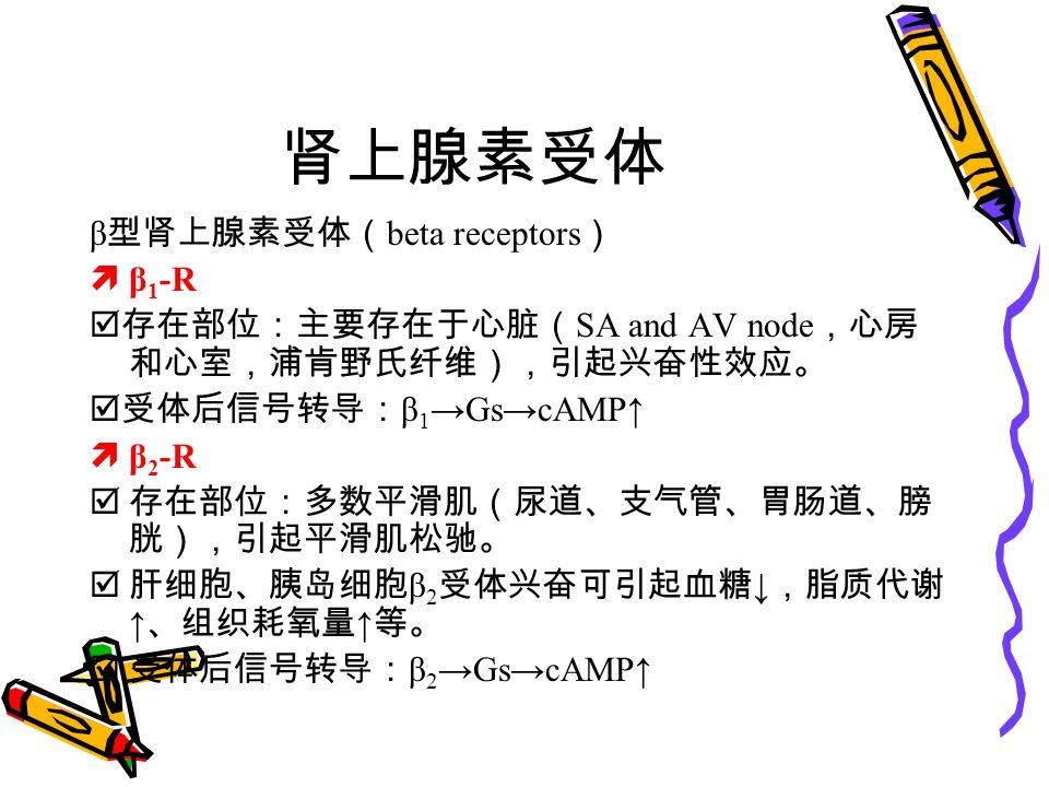 肾上腺素受体 β 型肾上腺素受体( beta receptors )  β 1 -R  存在部位:主要存在于心脏( SA and AV node ,心房 和心室,浦肯野氏纤维),引起兴奋性效应。  受体后信号转导: β 1 →Gs→cAMP↑  β 2 -R  存在部位:多数平滑肌(尿道、支气管、胃肠道、膀 胱),引起平滑肌松驰。  肝细胞、胰岛细胞 β 2 受体兴奋可引起血糖 ↓ ,脂质代谢 ↑ 、组织耗氧量 ↑ 等。  受体后信号转导: β 2 →Gs→cAMP↑