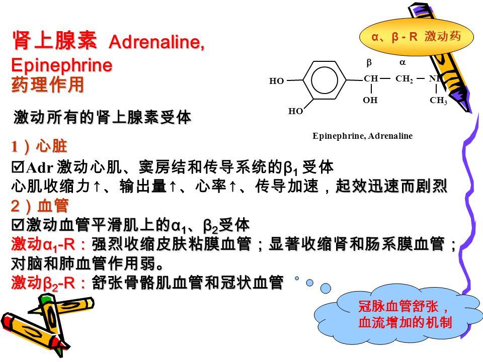 肾上腺素 Adrenaline, Epinephrine 药理作用 激动所有的肾上腺素受体 1 )心脏  Adr 激动心肌、窦房结和传导系统的 β 1 受体 起效迅速而剧烈 心肌收缩力 ↑ 、输出量 ↑ 、心率 ↑ 、传导加速,起效迅速而剧烈 2 )血管  激动血管平滑肌上的 α 1 、 β 2 受体 激动 α 1 -R :强烈收缩皮肤粘膜血管;显著收缩肾和肠系膜血管; 对脑和肺血管作用弱。 激动 β 2 -R :舒张骨骼肌血管和冠状血管 CHCH 2 NH OHCH 3 HO   Epinephrine, Adrenaline α 、 β - R 激动药 冠脉血管舒张, 血流增加的机制