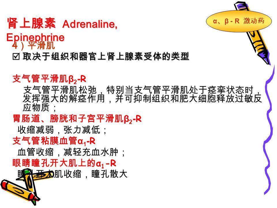 4 )平滑肌  取决于组织和器官上肾上腺素受体的类型 支气管平滑肌 β 2 - R 支气管平滑肌松弛,特别当支气管平滑肌处于痉挛状态时, 发挥强大的解痉作用,并可抑制组织和肥大细胞释放过敏反 应物质; 胃肠道、膀胱和子宫平滑肌 β 2 - R 收缩减弱,张力减低; 支气管粘膜血管 α 1 - R 血管收缩,减轻充血水肿; 眼睛瞳孔开大肌上的 α 1 -R 瞳孔开大肌收缩,瞳孔散大 肾上腺素 Adrenaline, Epinephrine α 、 β - R 激动药