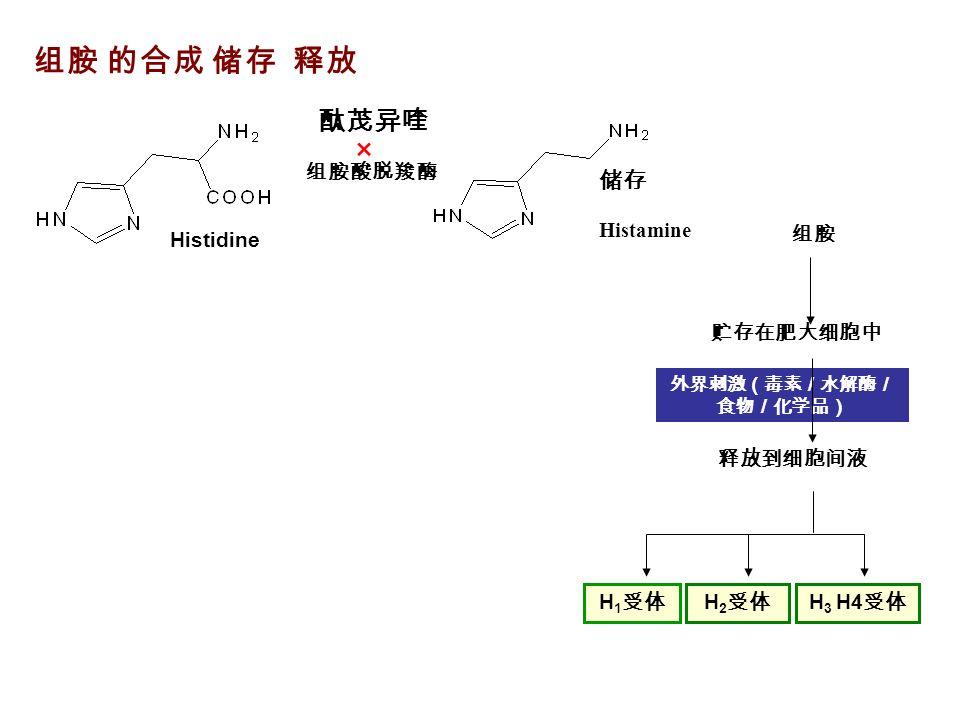 组胺 的合成 储存 释放 × 酞茂异喹 组胺酸脱羧酶 Histamine 储存 Histidine 外界刺激(毒素/水解酶/ 食物/化学品) 组胺 贮存在肥大细胞中 释放到细胞间液 H 1 受体 H 2 受体 H 3 H4 受体