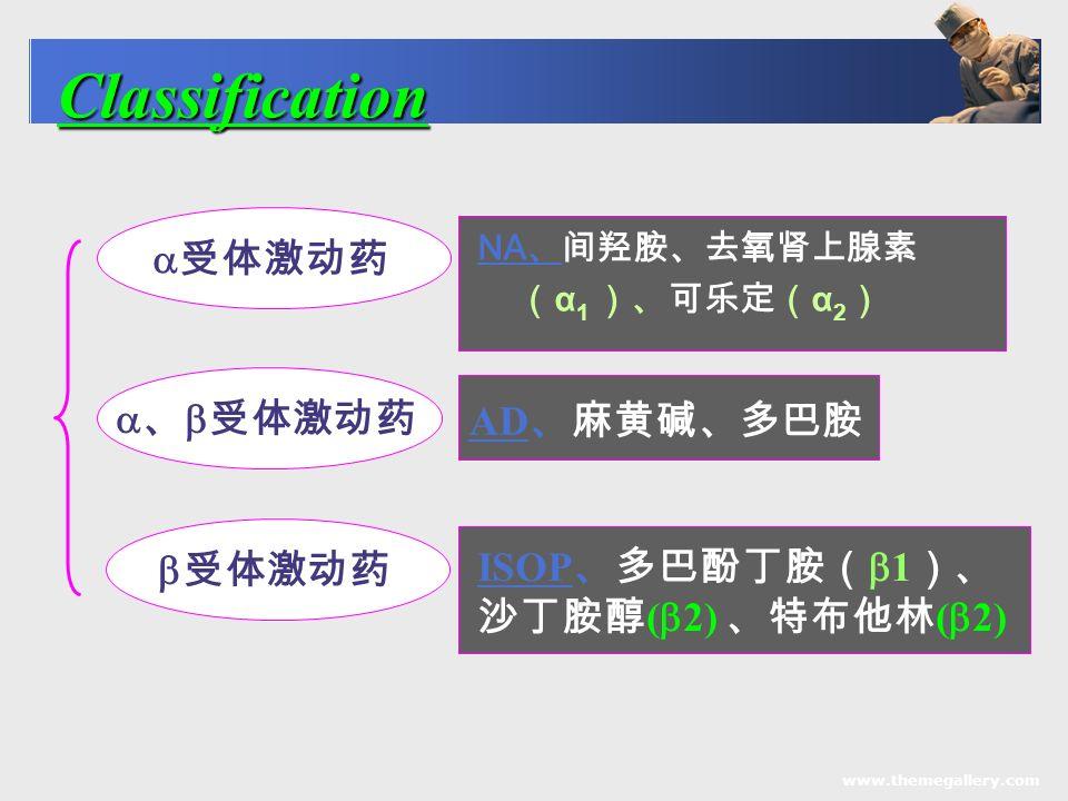www.themegallery.com NA 、间羟胺、去氧肾上腺素 ( α 1 )、可乐定( α 2 ) Classification  受体激动药  、  受体激动药  受体激动药 AD 、麻黄碱、多巴胺 ISOP 、多巴酚丁胺(  1 )、 沙丁胺醇 (  2) 、特布他林 (  2)