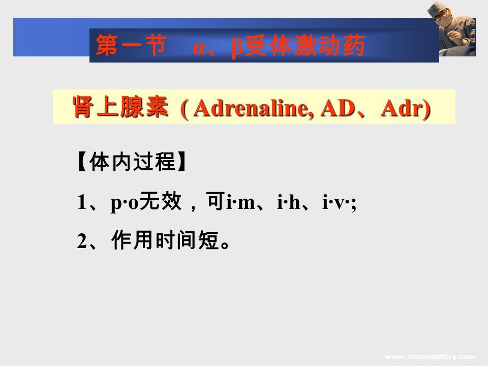www.themegallery.com 肾上腺素 ( Adrenaline, AD 、 Adr) 肾上腺素 ( Adrenaline, AD 、 Adr) 【体内过程】 1 、 p·o 无效,可 i·m 、 i·h 、 i·v·; 2 、作用时间短。 第一节 α 、 β 受体激动药