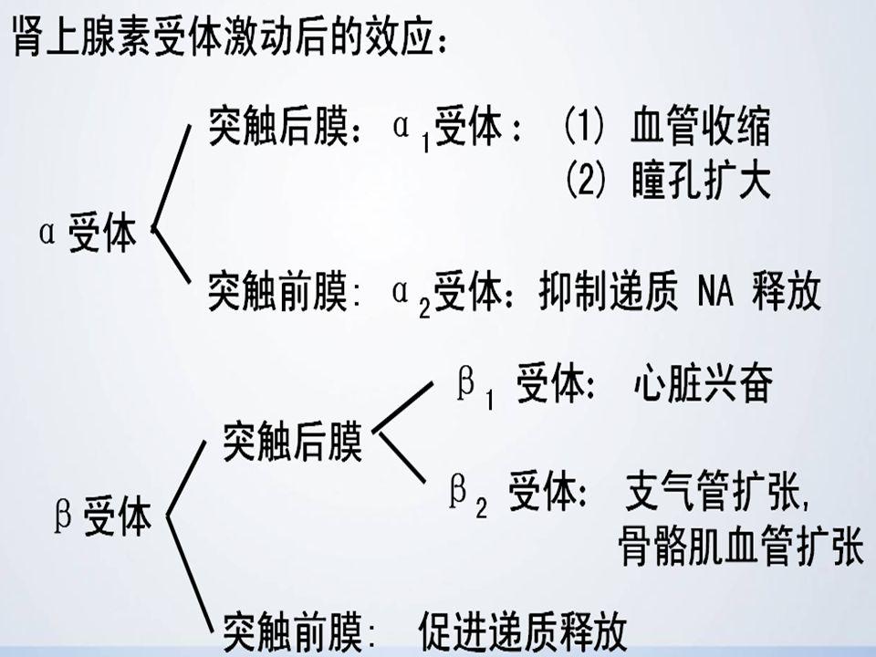 二、分类 (一)按结构分为:①儿茶酚胺类 具 有儿茶酚核,如 NE 、 ADR 、 ISO 、 DA ; ②非儿茶酚胺类 无儿茶酚胺核结构, 如间羟胺、麻黄碱。 (二)按作用的受体分为:①+ α 、 β 如 ADR ;② 主要+ α 如 NA ;③ + β 如 ISO ;④+ α 、 β 、 DA 如多巴胺。
