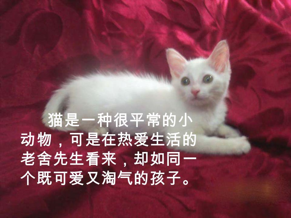 猫是一种很平常的小 动物,可是在热爱生活的 老舍先生看来,却如同一 个既可爱又淘气的孩子。