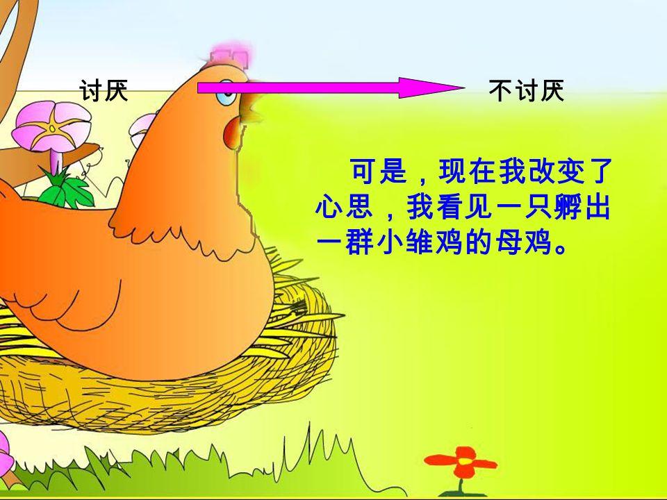 汇报交流 讨厌不讨厌 可是,现在我改变了 心思,我看见一只孵出 一群小雏鸡的母鸡。