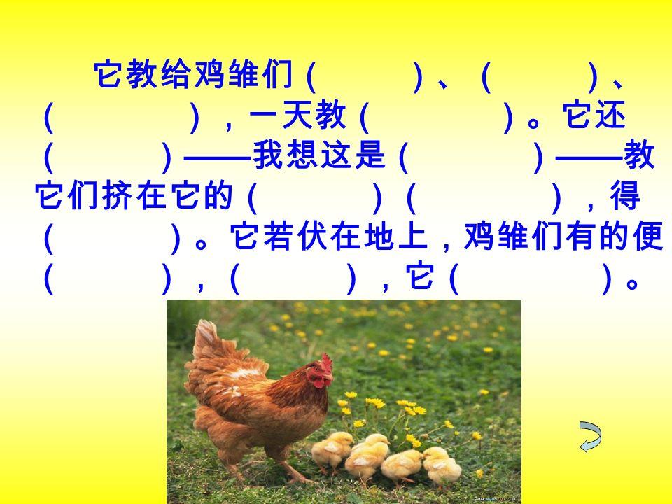 它教给鸡雏们( )、( )、 ( ),一天教( )。它还 ( ) —— 我想这是( ) —— 教 它们挤在它的( )( ),得 ( )。它若伏在地上,鸡雏们有的便 ( ),( ),它( )。