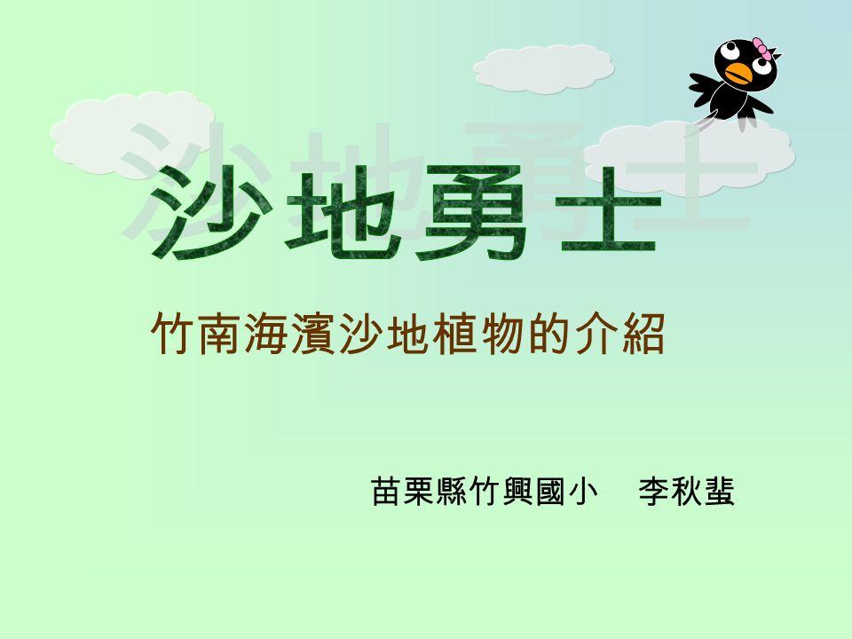 竹南海濱沙地植物的介紹 苗栗縣竹興國小 李秋蜚