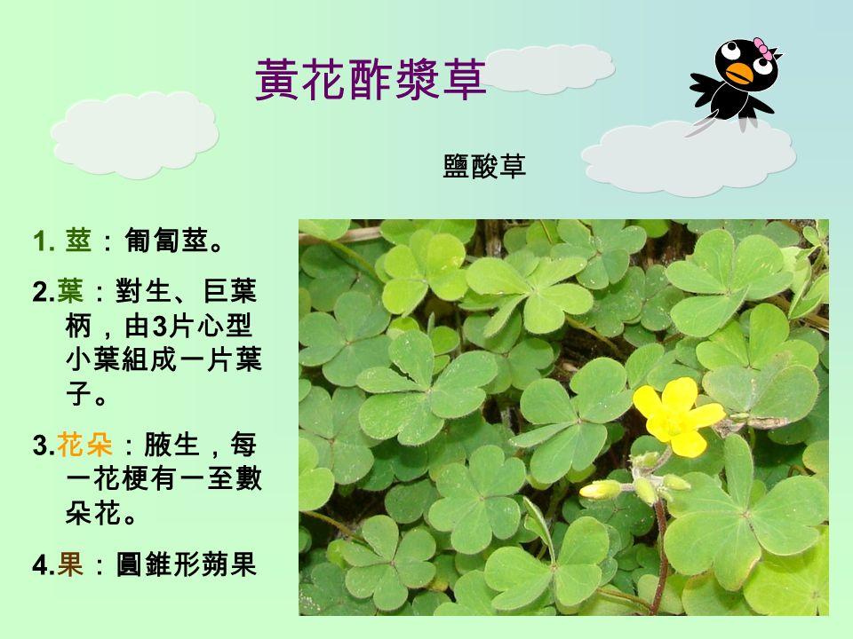 黃花酢漿草 1. 莖:匍匐莖。 2. 葉:對生、巨葉 柄,由 3 片心型 小葉組成一片葉 子。 3. 花朵:腋生,每 一花梗有一至數 朵花。 4. 果:圓錐形蒴果 鹽酸草