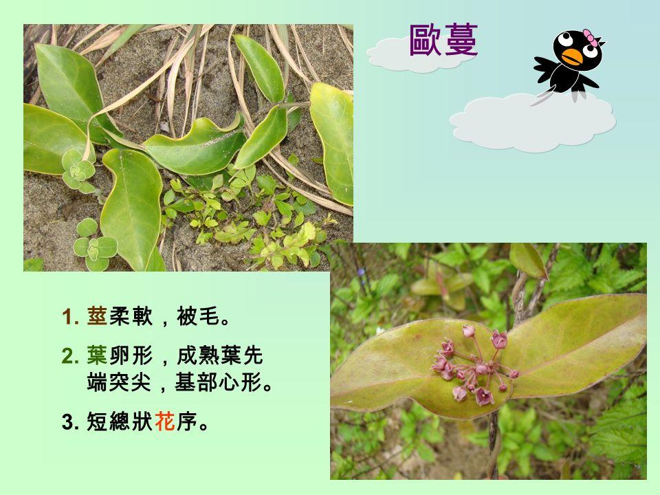 歐蔓 1. 莖柔軟,被毛 。 2. 葉卵形,成熟葉先 端突尖,基部心形。 3. 短總狀花序。