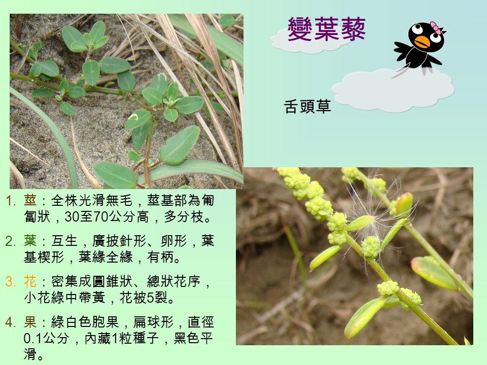變葉藜 1. 莖:全株光滑無毛,莖基部為匍 匐狀, 30 至 70 公分高,多分枝。 2. 葉:互生,廣披針形、卵形,葉 基楔形,葉緣全緣,有柄。 3.