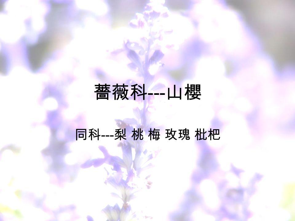 薔薇科 --- 山櫻 同科 --- 梨 桃 梅 玫瑰 枇杷