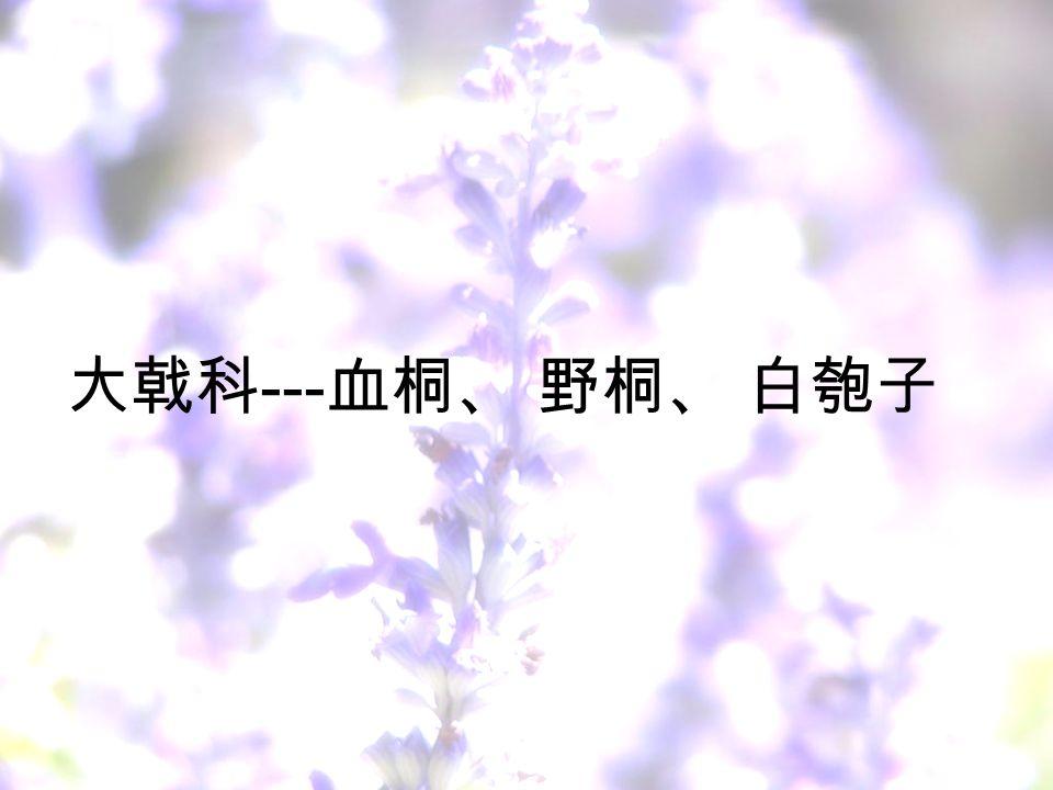 大戟科 --- 血桐、 野桐、 白匏子