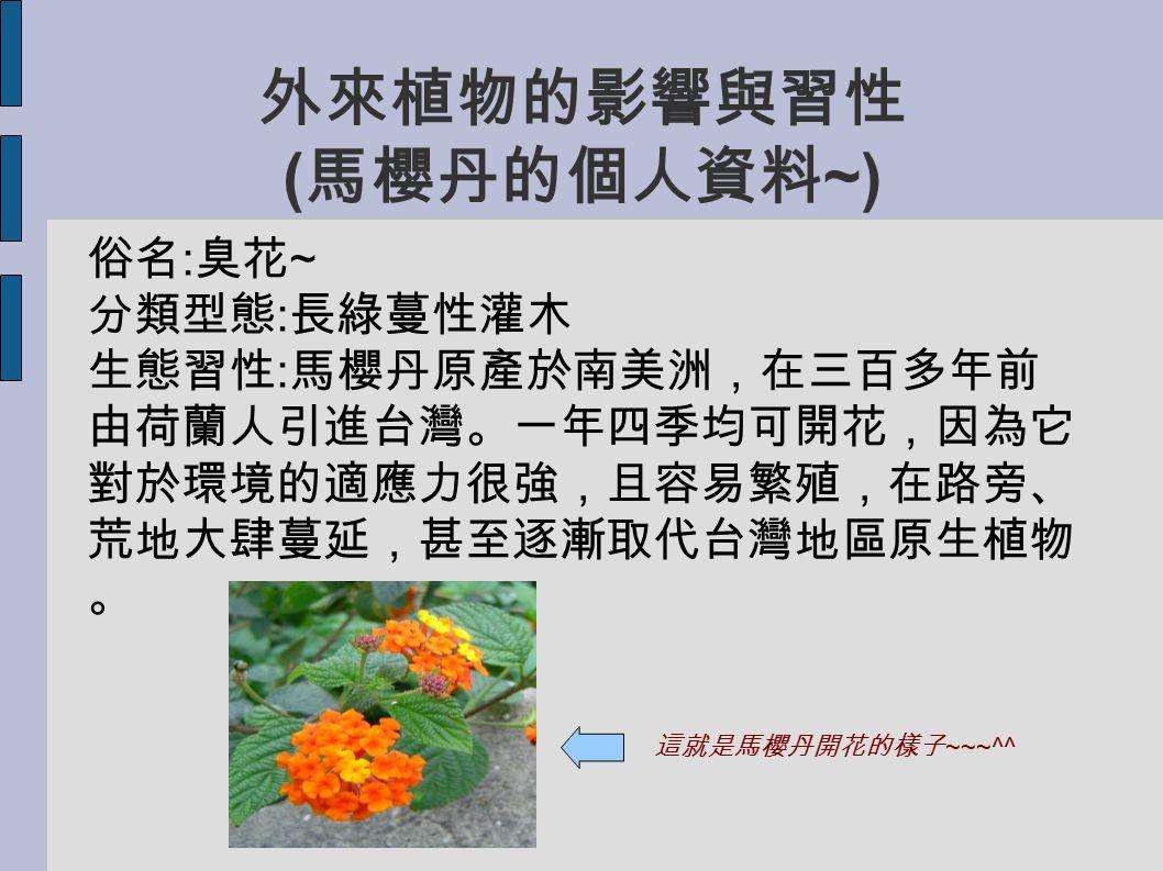 外來植物的影響與習性 ( 馬櫻丹的個人資料 ~) 俗名 : 臭花 ~ 分類型態 : 長綠蔓性灌木 生態習性 : 馬櫻丹原產於南美洲,在三百多年前 由荷蘭人引進台灣。一年四季均可開花,因為它 對於環境的適應力很強,且容易繁殖,在路旁、 荒地大肆蔓延,甚至逐漸取代台灣地區原生植物 。 這就是馬櫻丹開花的樣子 ~~~^^