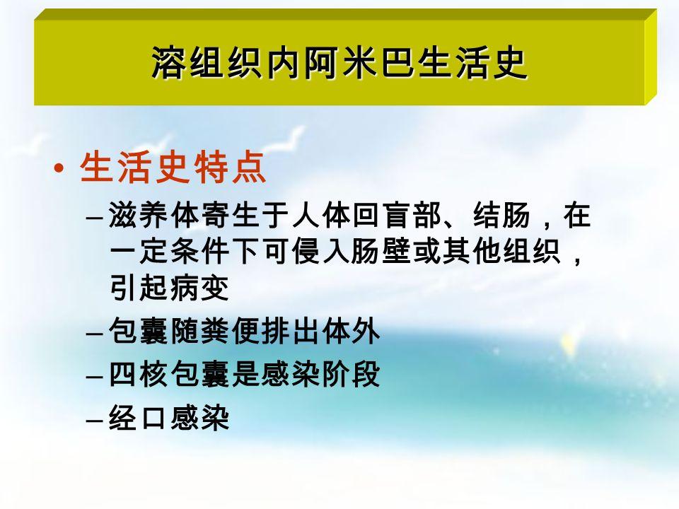 四核包囊 大滋养体 小滋养体 包囊 (一核、二核 及四核包囊) 致病阶段 感染阶段