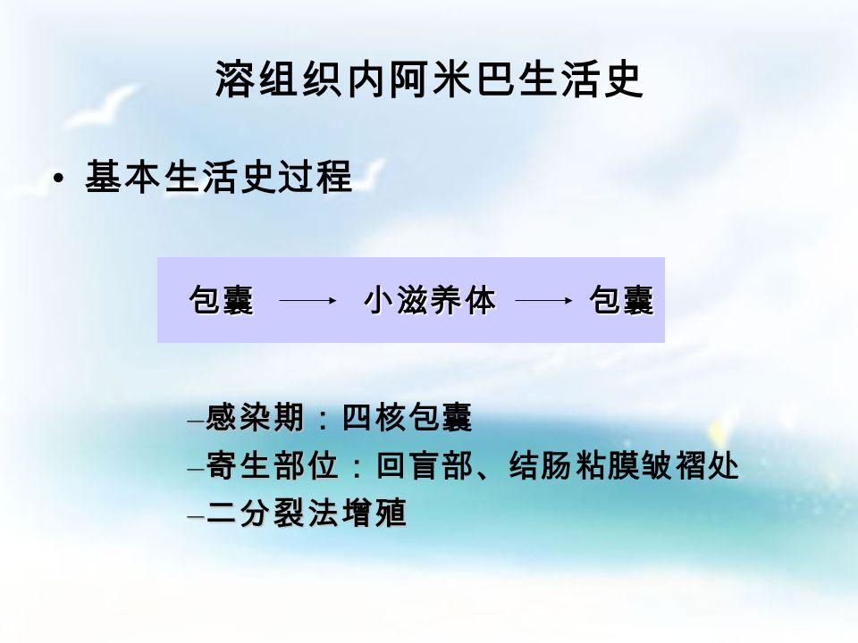 包括 包括 – 单核包囊 – 双核包囊 – 四核包囊 拟染色体 糖原泡 (二)包囊:静止期