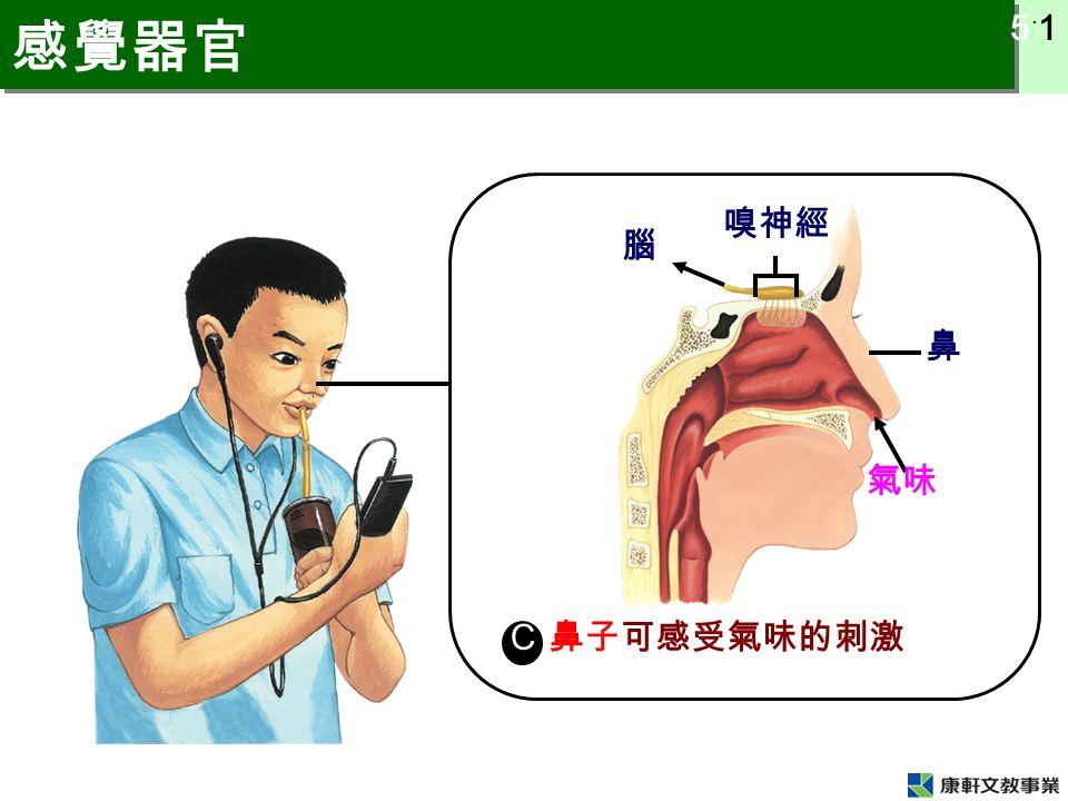 5 ˙ 1 感覺器官 C 腦 氣味 鼻 嗅神經 鼻子可感受氣味的刺激