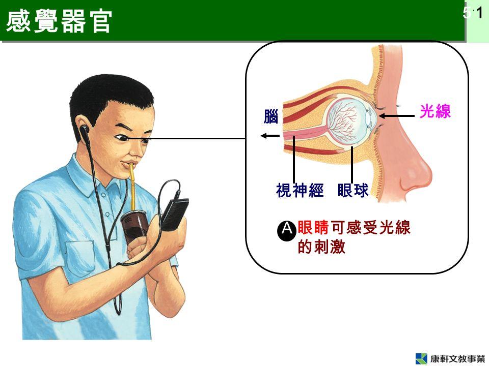 5 ˙ 1 感覺器官 光線 眼球視神經 腦 A 眼睛可感受光線 的刺激