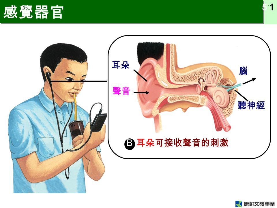 5 ˙ 1 感覺器官 B 腦 聲音 耳朵 聽神經 耳朵可接收聲音的刺激